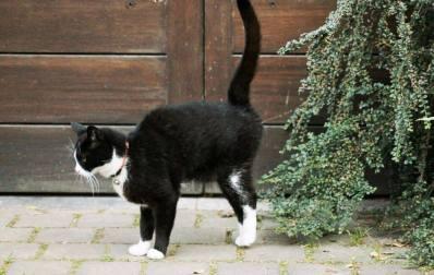 gato-orina-fuera-del-arenero-marcaje-por-orina-1024x650