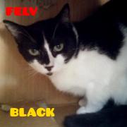 blackpeq