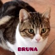 brunapeq
