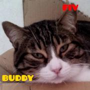 buddype
