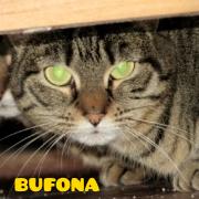 bufonapeq
