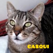 casquipeq