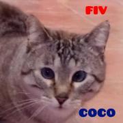 cocopeq