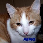 mimopeq