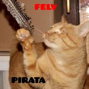 piratapeq