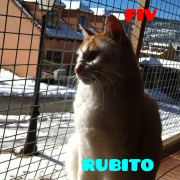 rubitopeq