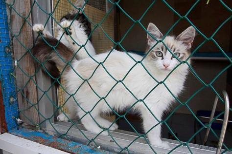 el-gato-andaluz-006