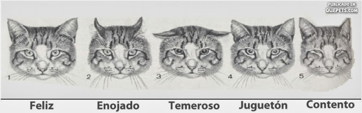 gatos y lenguaje orejas