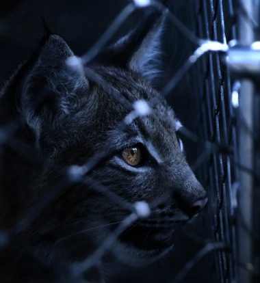 black-and-white-animal-dark-pet-cat-feline-1195969-pxhere.com