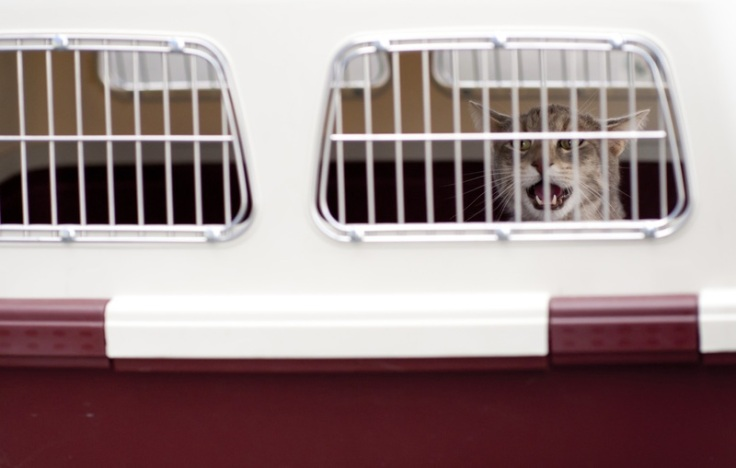 plane-aircraft-transport-pet-cat-cage-903231-pxhere.com