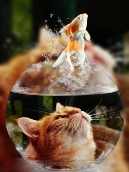 cat-face-goldfish-glass-close-view-1367741-pxhere.com.jpg